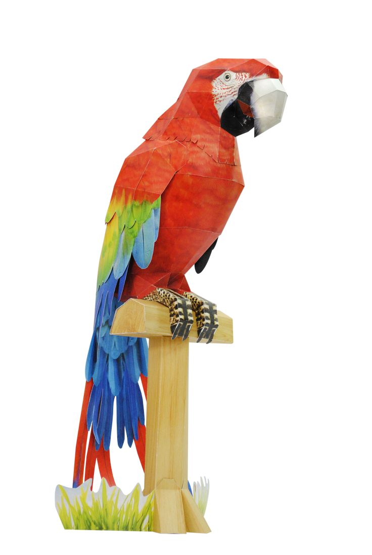 """parrot bird essay The african grey parrot is not just a top talker — this bird is also known for its  extreme intelligence, which gives them the moniker """"the einsteins of the bird  world."""