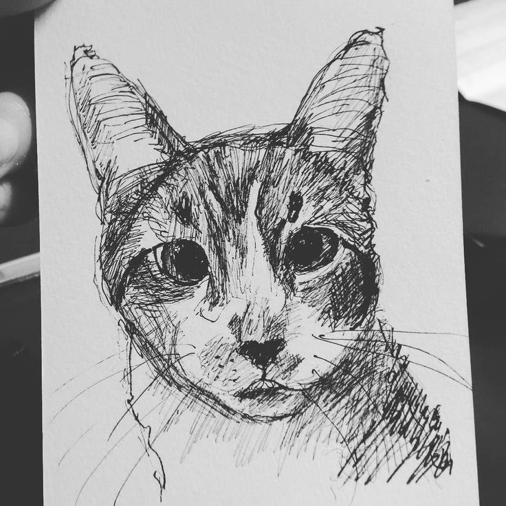 This is for @kellythekitty_ ! Hope you like it!  See more at http://tclausen.net  #cat #catstagram #catsofinstagram #petart #petsofinstagram #petstagram #portrait #study #sketch #ballpoint #twitter #kitty