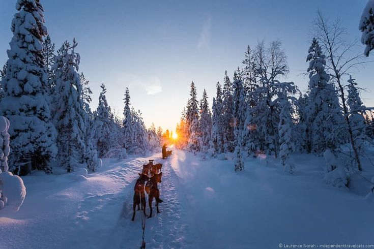 Dogsledding in Lapland - Visiting Finland in Winter: Top 15 Winter Activities in Finland
