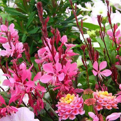 fleurs d t en jardini re id e d 39 image de fleur. Black Bedroom Furniture Sets. Home Design Ideas