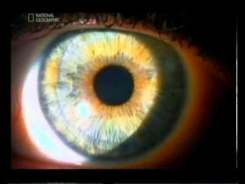 Почему человек видит? Важность зрения. Видео зрение YouTube.