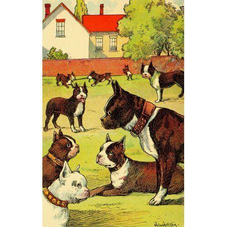 Dogs & Puppies 1908 Boxers Canvas Art - Hugo Von Hofsten (18 x 24)