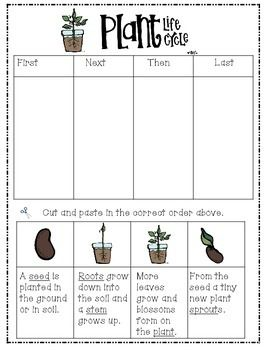 PLANT...LIFE CYCLE FREEBIE! - TeachersPayTeachers.com