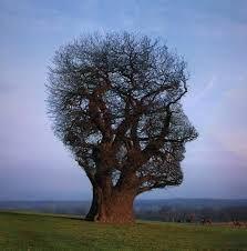 Qué es el mindfulness?