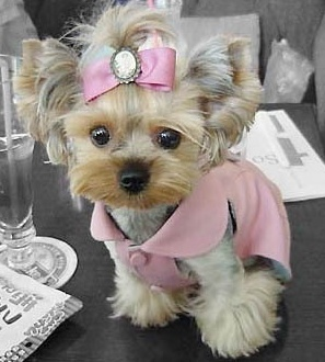 Miss Belle, her little jacket is to die for & cameo with a bow, she is the Belle of the ball.