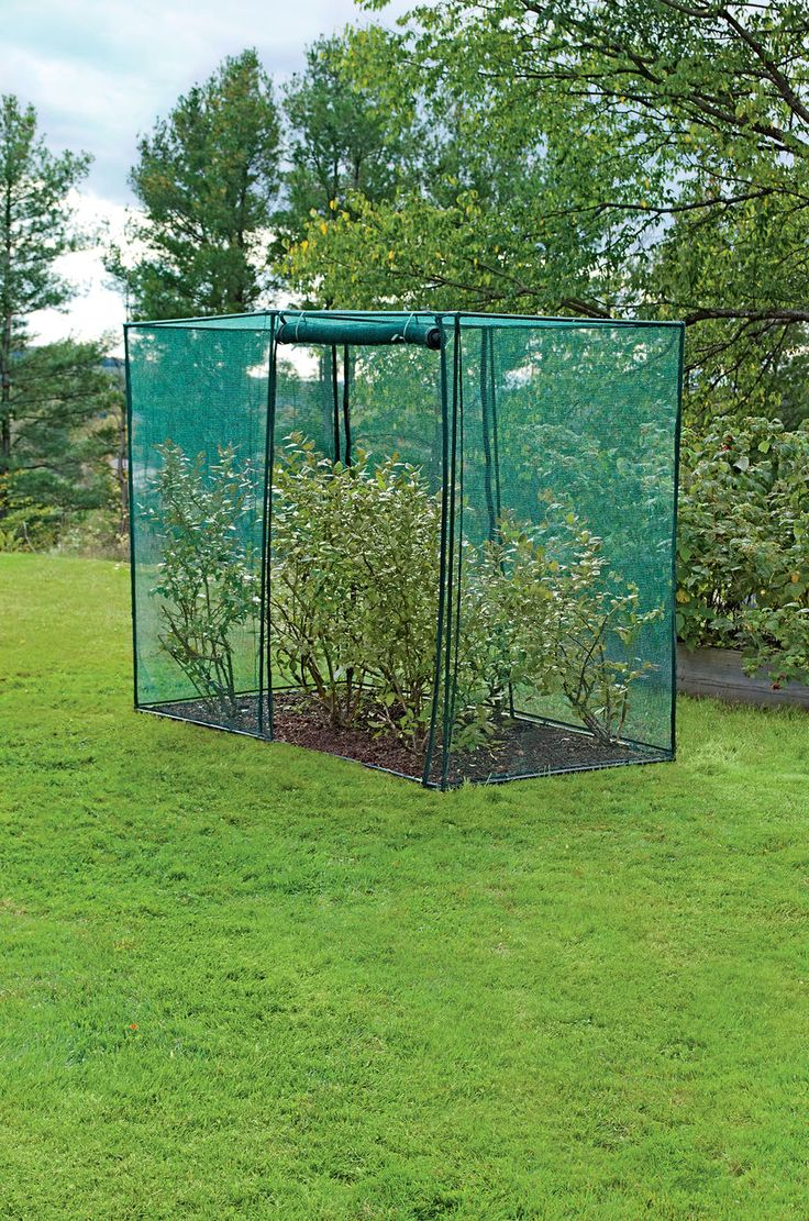 Crop Cage, 4' x 8' x 6' Tall | Blueberry Bush Covers | Crop  Might be an option for protection from deer and bunnies.