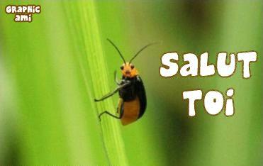 Un mignon petit insecte jaune et noir te salut !