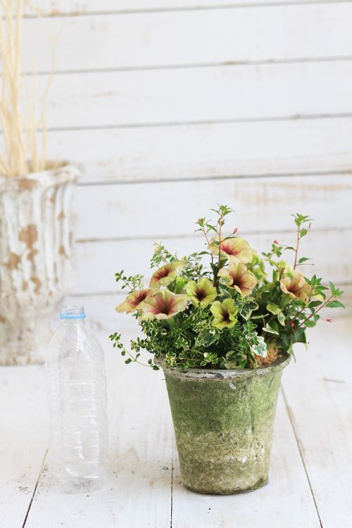 花植物ギャザリング・多肉植物寄せ植え販売通販のアトリエ華もみじ HMstore