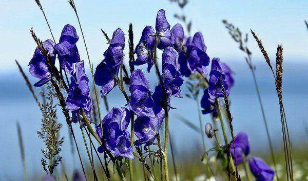 Aquí te presentamos 10 de las plantas venenosas más peligrosas del mundo para que estés más informado y no creas que, por tener una bella apariencia, son...