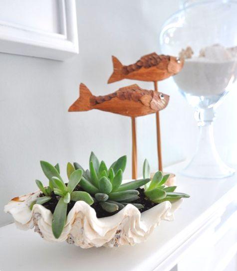 Succulent Shell Planter Ideas: http://www.completely-coastal.com/2014/05/succulent-shell-planter-ideas.html
