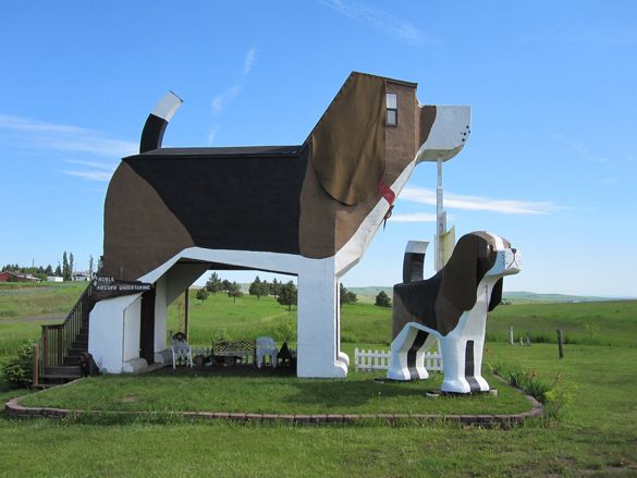 Toby and Sweet Willy, two large wood-carved dogs in Cottonwood, Idaho, are the world's biggest beagles. At 12 and 30 feet tall respectively they tower above most others. But these canines aren't just there for looks – the larger of the two is also a bed and breakfast! Visitors to the Dog Bark Park Inn can spend the night in a Sweet Willy's belly and muzzle. It's any dog-lovers dream.