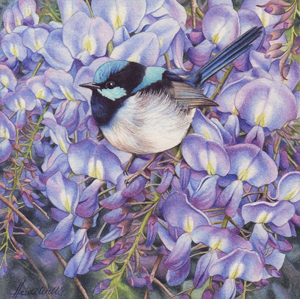 Wisteria and Blue Wren-0
