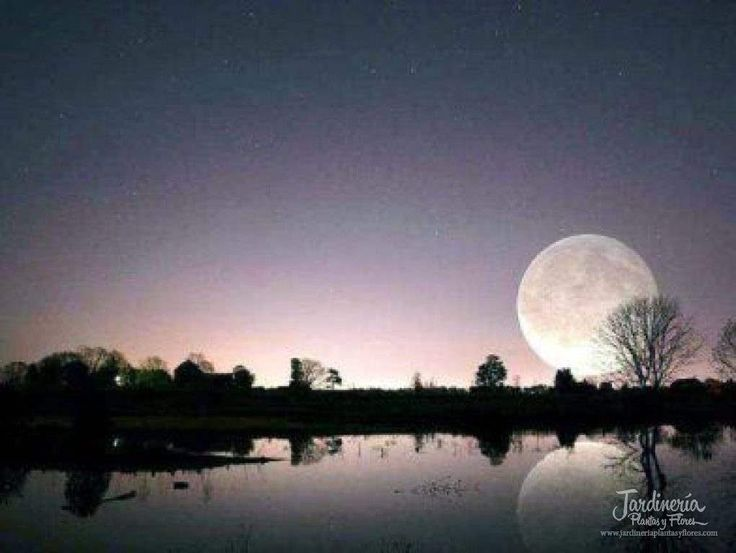 Noche en el lago - http://jardineriaplantasyflores.com/fotos/noche-en-el-lago/