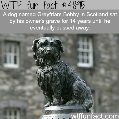 Greyfriars Bobby, lessons in loyalty from man's best friend - WTF fun facts