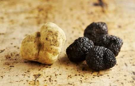 Truffles-the culinary jewels of Istria