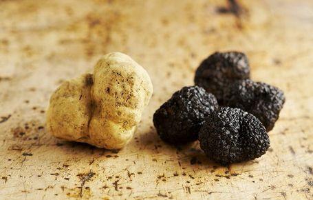 Truffles - the culinary jewels of Istria