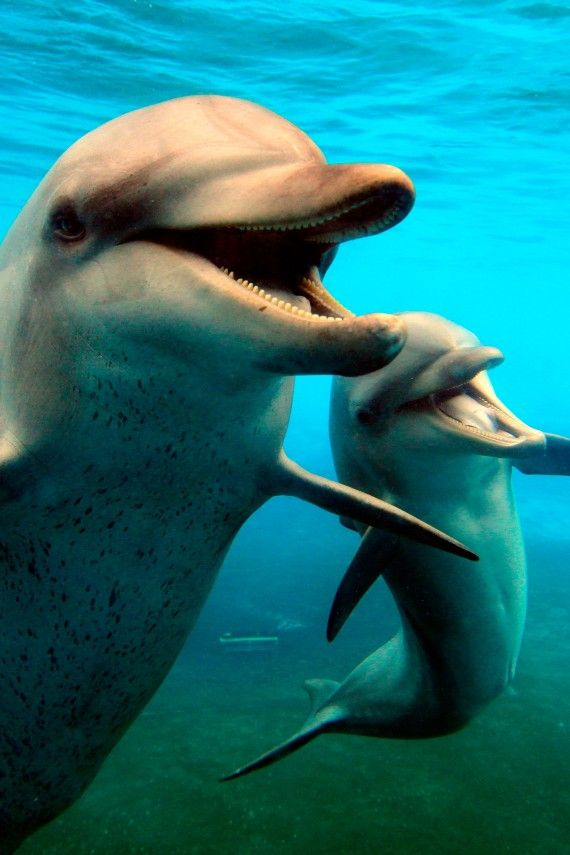 A happy mother and baby dolphin <3
