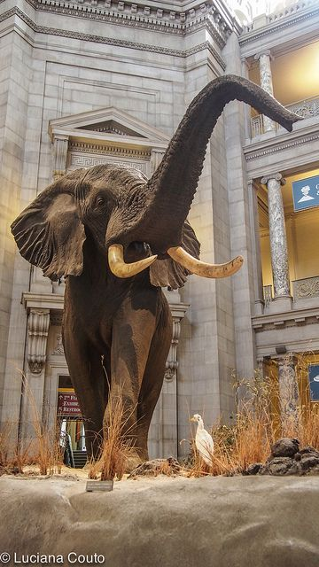 Museum of Natural History, Washington DC, USA