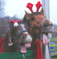 Google Image Result for http://i141.photobucket.com/albums/r74/psychovery/Funny%2520Pics/5-Max-und-Momo-Weihnachten2006-15a.jpg: Mondays Muse, Christmas Time, Pinners Friends, Horses, Christmassy Christmas, Country Christmas, Hors Christmas, Belly Laugh, Merry Christmas