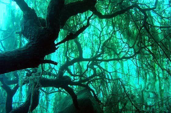 Rumbo Familiar - Bosque Sumergido en el Lago Traful.