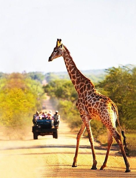 South Africa - see our summer honeymoon hot spots #keeprolling