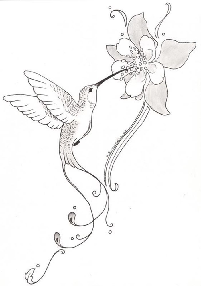 Image result for simple hummingbird sketch