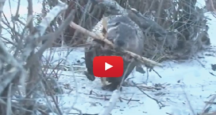 UNREAL! A Reporter Was Trying To Record A Beaver, But He NEVER Expected What He Saw! Must See!