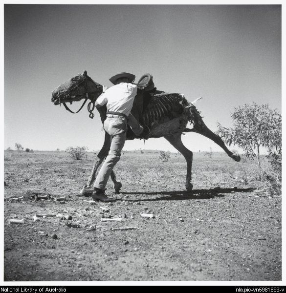 Nolan, Sidney, Sir, 1917-1992. Man preparing to mount the saddled dry carcass of a horse, Queensland, 1952 [picture]