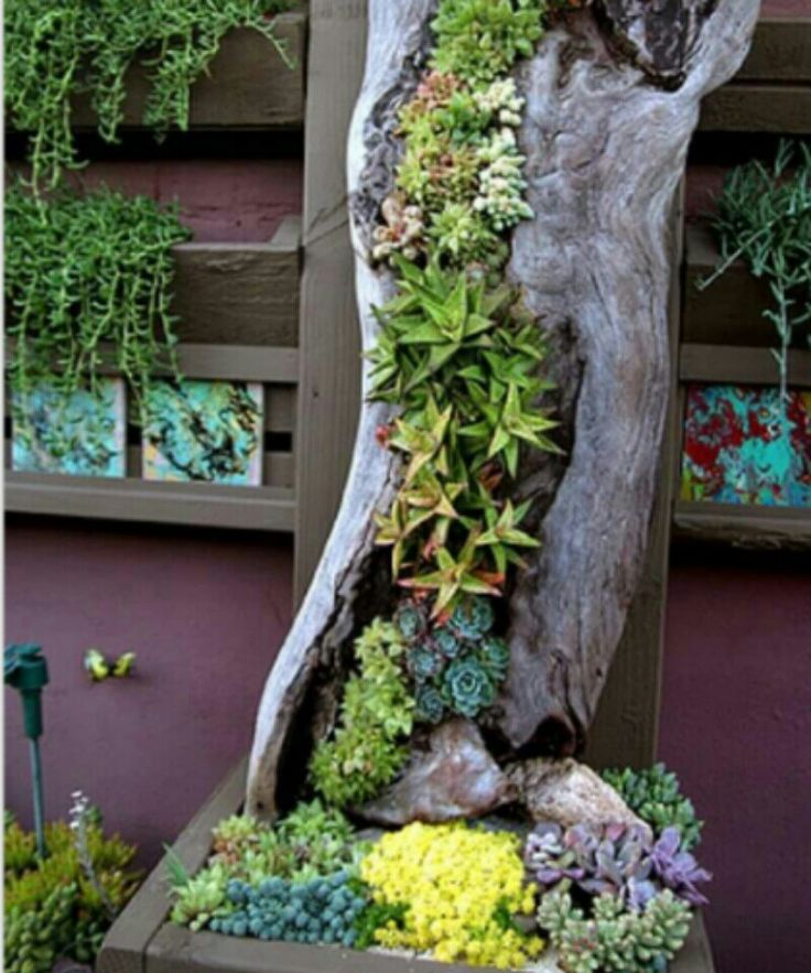 Old Tree Succulent DIY - Love This