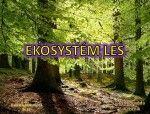 ekosystém les - 5 interaktivních cvičení