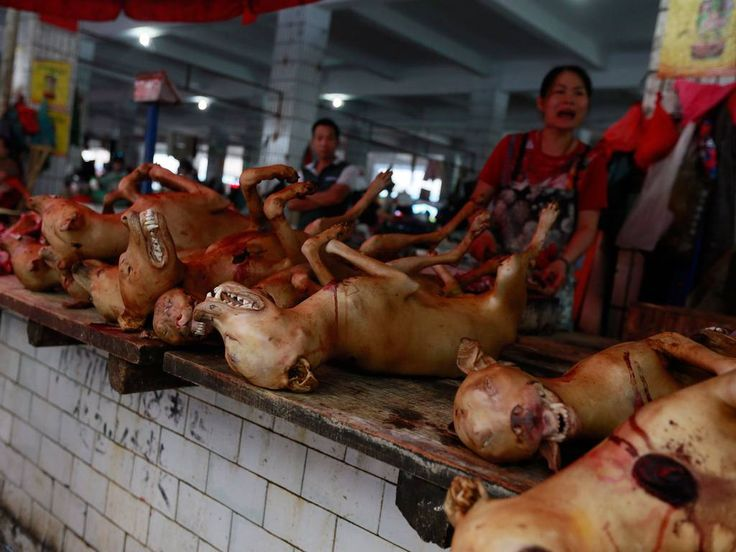 Resultado de imagen para festival yulin en china