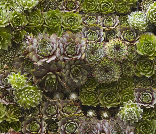 living wall of succulents - the easiest to grow... low water requirements!