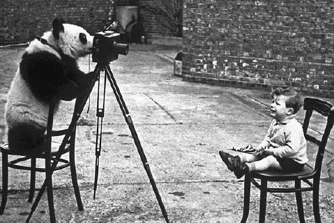 Ming the panda gets behind the camera for photographer Bert Hardy in 1939 in London Zoo. In the chair is Hardy's son Mike. Getty Image