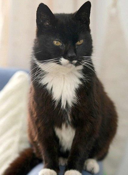 Creme Puff (August 3, 1967 – August 6, 2005) was an American cat who died aged 38 years and 3 days. She was the oldest cat ever recorded, according to the 2010 edition of Guinness World Records.