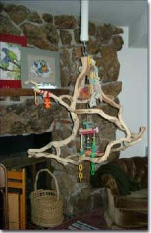 Hanging Bird Perch Can Diy Too Birdsupplies Bird Supplies