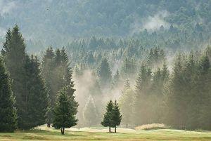 Veneti e friulani saliti sull'altopiano per difendere la foresta