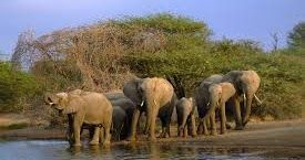 Kruger Park Travel is a website and an online booking agent for tours and accommodations establishments offered by different companies allover Africa. With more than 30 years of experience in the tourism industry, they have planned different safari packages and involvements to fit most of the requirements and budget ranges.