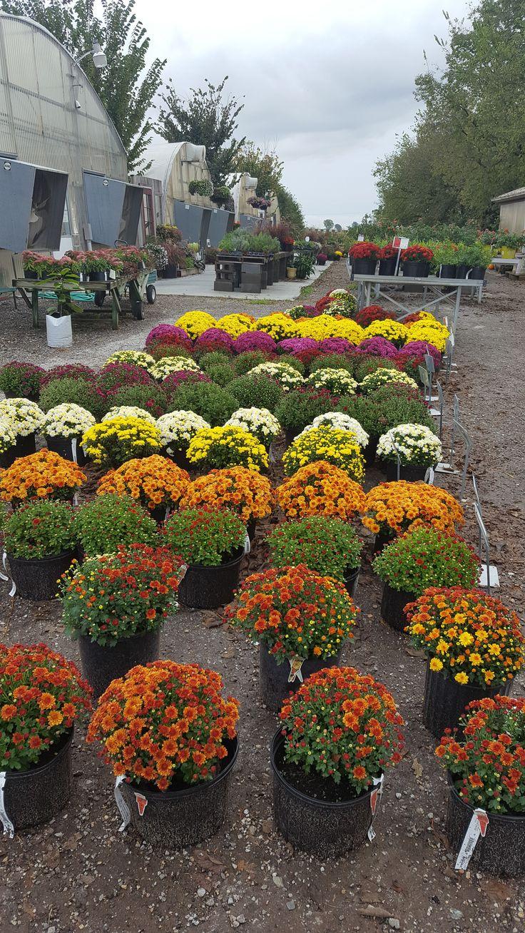 Hiawatha Autumn garden, Shade garden, Garden