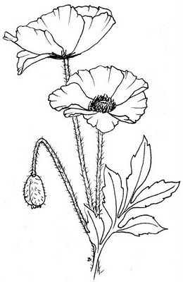 poppies - paint these in with water color - would be so pretty