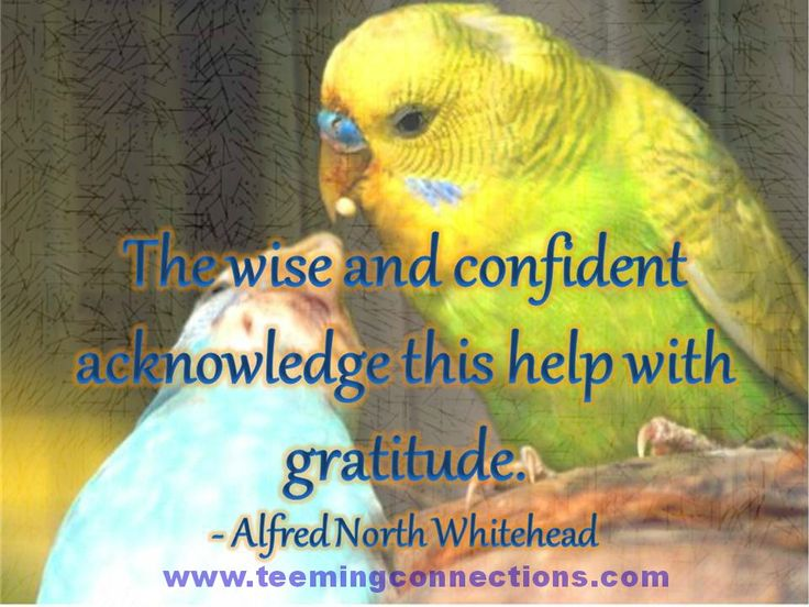 The wise and confident acknowledge this help with gratitude. - Alfred North Whitehead #teemingconnections