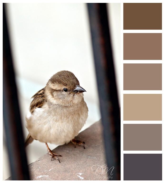 Little Bird {brown & grey color palette}