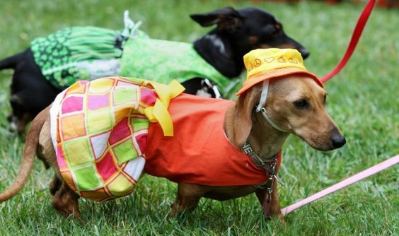 Wienerfest: A pawfully good time!