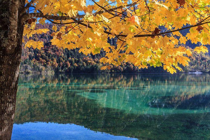 Herbst am Almsee
