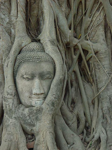 Ta Prohm, Angkor Wat, Siem Reap: een harmonisch samenspel tussen natuur en archeologie. Kijk voor meer reisinspiratie op www.nativetravel.nl