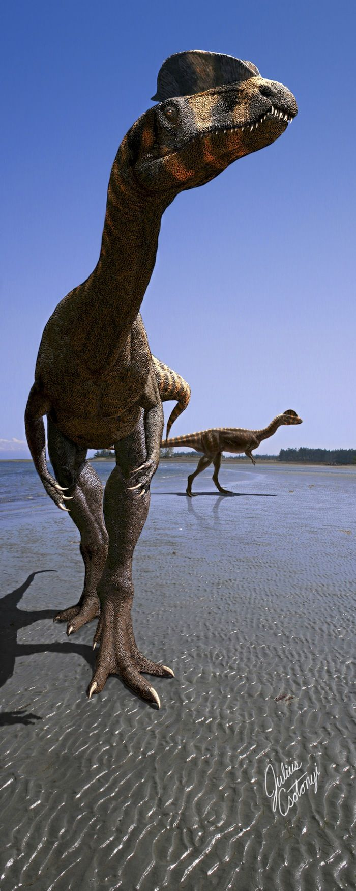 Large Theropod dinosaurs [eg:Dilophosaurus] had bumps,knobs & crests on their heads