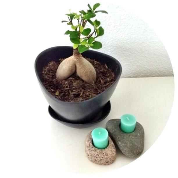 #flowerpot #bonsai #stone #candles