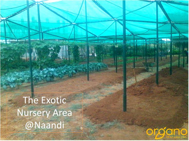 The organically grown Exotic Nursery at Naandi