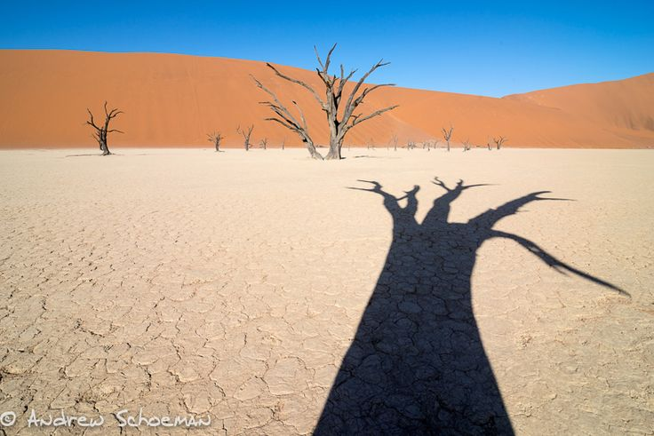 """""""Shadows"""" Late Afternoon in Deadvlei and the shadows start to get longer ! for more images of Deadvlei please look on the link http://www.andrewschoemanphotography.com/deadvlei"""
