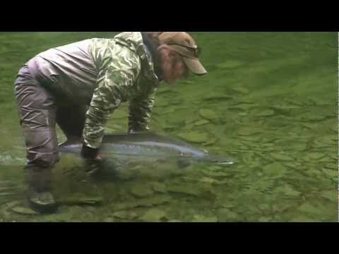 A wonderful video - Gaspe Atlantic Salmon Fly fishing/Peche saumon Atlantique