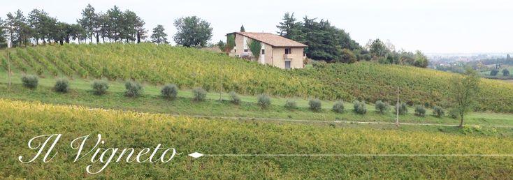 Visitate il nostro sito web! Disponibile anche lo SHOP ONLINE per comprare direttamente da casa i nostri vini! Che aspettate ad avere sulle vostre tavole delle buone bottiglie di vino rosso? 🍷 Per qualsiasi informazione siamo a vostra completa disposizione! ;) 📞 +39 0543 741389 📩 info@villatrentola.it 🍇 www.villatrentola.it  #TenutaVillaTrentola #Vino #ViniEmiliaRomagna #Wine #VinoTreBicchieri #Bertinoro #VinoBertinoro #VillaTrentola #ViniPregiati #VinoMadeInItaly #Winery #ShopOnline